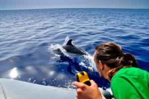 Osservazione e studio cetacei