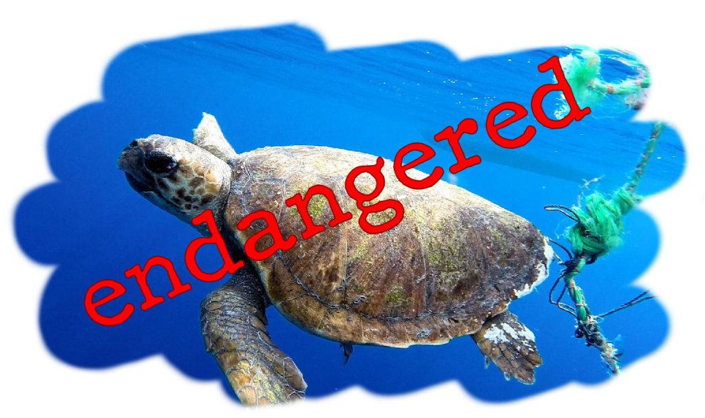 tartaruga impigliata endangered